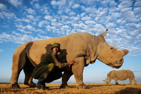 Ranger and caretaker Mohammed Doyo with female rhino Najin.