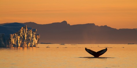 Whale Tale, Greenland