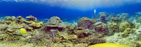 Coral Reef, Santo, Vanuatu