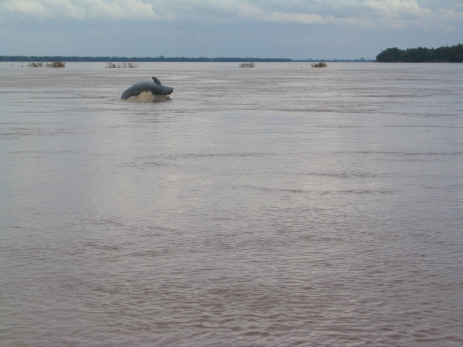 Mekong River Dolphin Death Reduces Local Population in Lao to 5