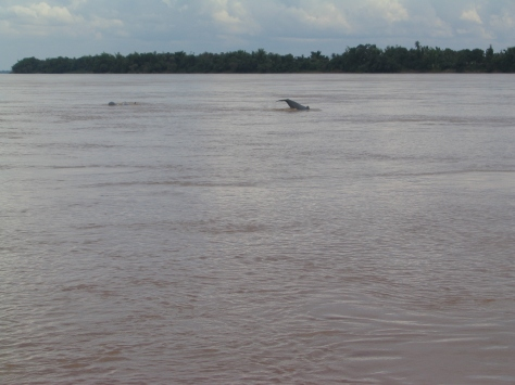 Mekong River Dolphin3