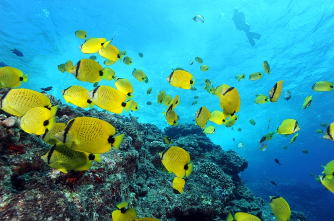 What Marine Ecosystem is Most Threatened By Human Impact?