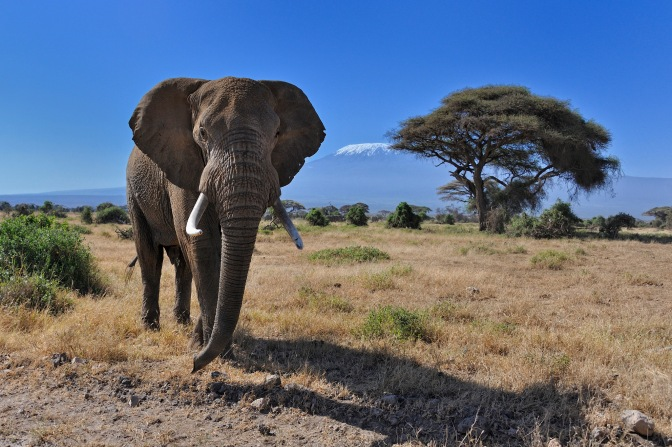 World's Largest Herbivores At Risk of Extinction From Hunting and Habitat Loss