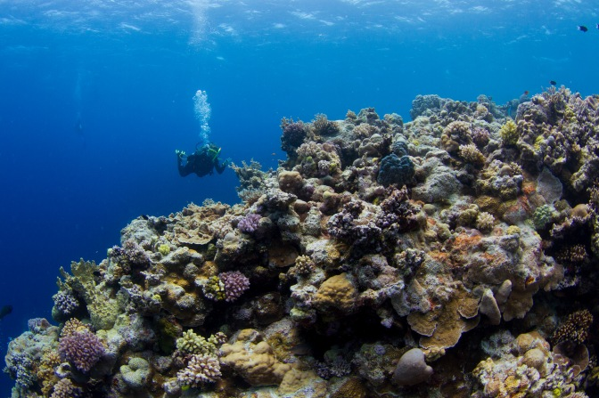 One Step Closer to Ending Great Barrier Reef Dumping