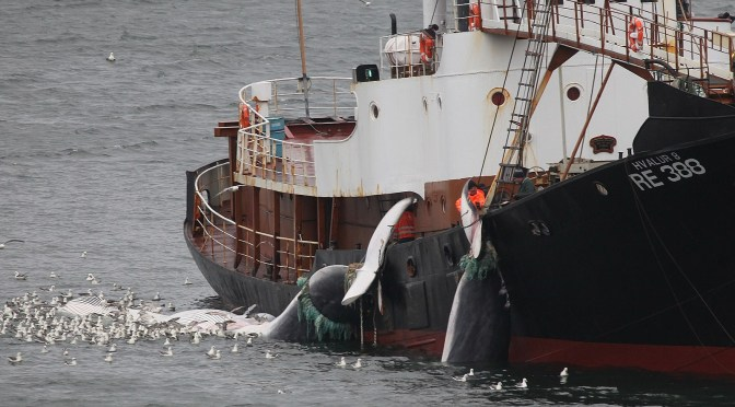 Japan Plans to Resume Independent Antarctic Whaling Later in 2015