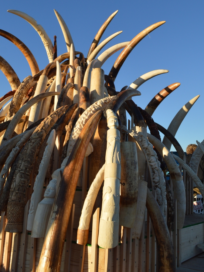 Thailand Destroyed Its Ivory This Year to Join in Fight Against Wildlife Crimes
