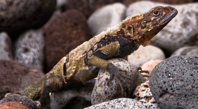 Cold-Blooded Animals Will Probably Struggle With Climate Change
