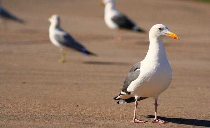 Almost Every Seabird Has a Stomach Full of Trash and Plastic