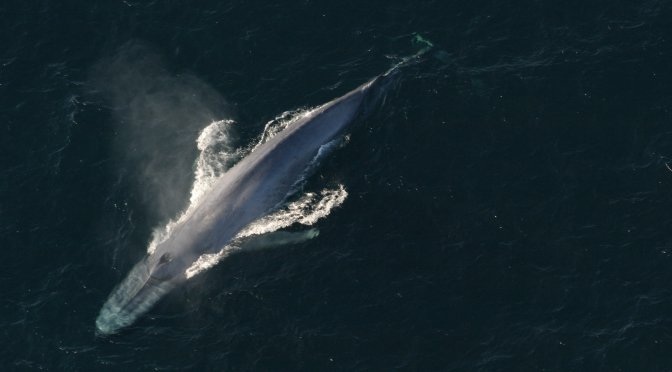 Blue Whale Sighting in English Waters is the First Since Near Extinction