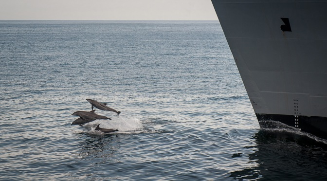 Whales and Dolphins Win Fight Against U.S. Navy Over Use of Underwater Explosives