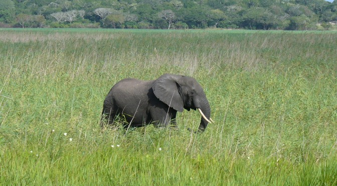 Poachers Have Killed Half of the Elephants In Mozambique In Just 5 Years