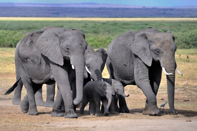 U.S. and China Team Up to Fight Illegal Wildlife Trade With a Ban on Ivory