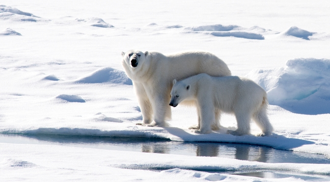 Shell Abandons Arctic Drilling, Obama Cancels 2016 and 2017 Offshore Oil Leases