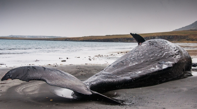 What Was Behind the Mysterious Whale Deaths on the Pacific Coast in 2015?