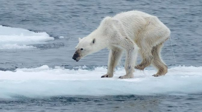 U.S. and Russia Have Joined Forces to Save the Polar Bear