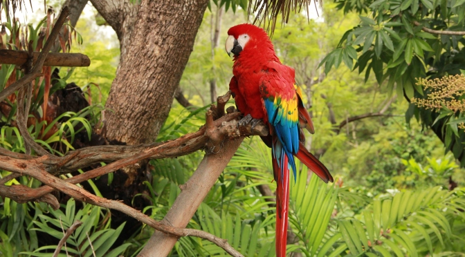 Macaws Being Released in Mexico Continue to Fuel Their Comeback