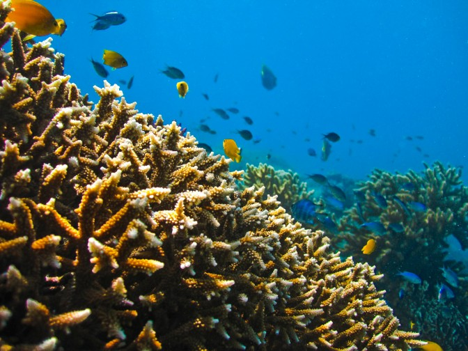 Australia's Ban on Dumping in the Great Barrier Reef