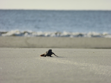 Photo by U.S. Fish and Wildlife Service Southeast Region / CC BY 2.0