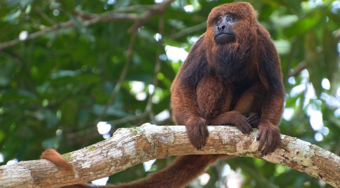 The 25 Most Endangered Primates in the World
