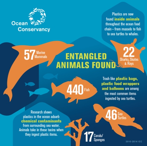 entangled-animals-infographic