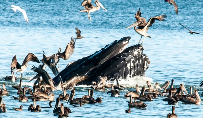Trouble for Whales? Their Favorite Food Could Be Disappearing