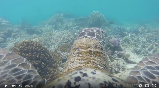 What the Reef Looks Like Through the Eyes of a Turtle [VIDEO]