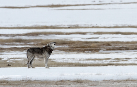 Photo by Yellowstone National Park / Public Domain