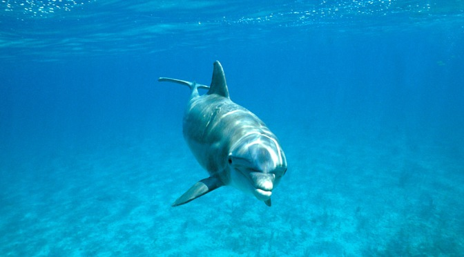 There's a Dolphin Baby Bust in the Gulf of Mexico and It's Concerning
