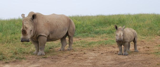 Nepal Celebrates Over 2 Years of Zero Rhinos Poached