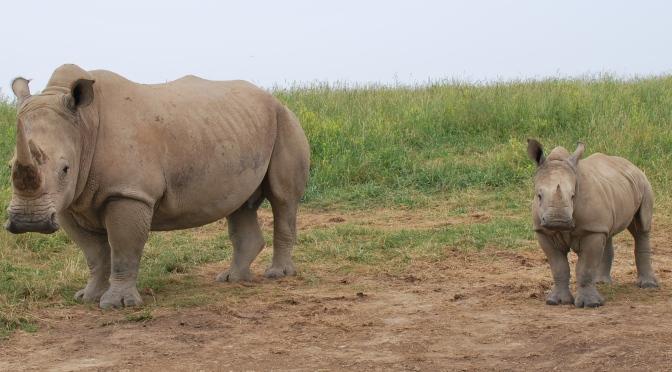 Nepal Celebrates Over 2 Years of Zero Rhinos Poached